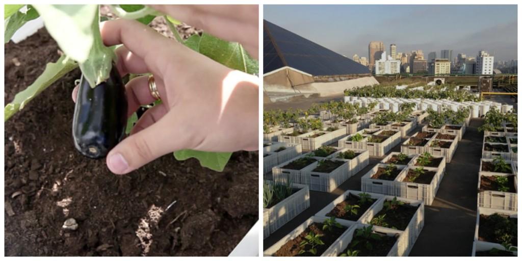 Shopping de São Paulo vence prêmio de sustentabilidade com horta e composteira em sua cobertura. Foto: reprodução